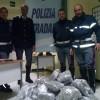 A24: ARRESTATI DUE ALBANESI, NASCONDEVANO IN AUTO 45KG DI MARIJUANA
