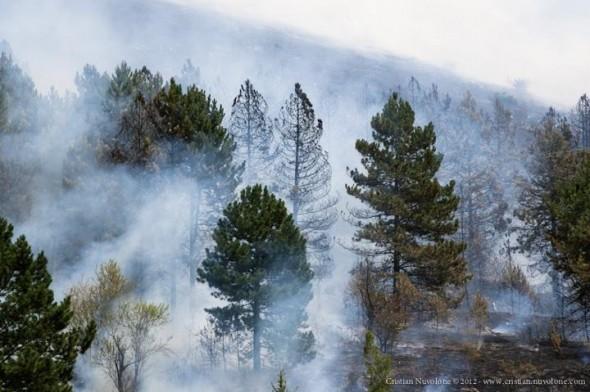 Incendio a Roio (Aq), 6.8.2012 - foto: Cristian Nuvolone