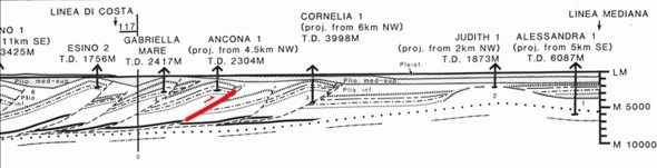 Schema interpretativo di una delle linee sismiche attraverso la costa all'altezza del M. Conero. La faglia indicata in rosso è una delle possibili sorgenti sismiche attive nella regione