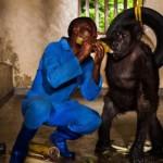 ABRUZZO: IL PARCO DELLA MAJELLA «ADOTTA» 9 GORILLA DEL CONGO
