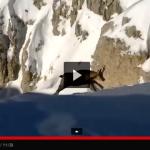 VIDEO: LO SHOW DEI CAMOSCI SULLA NEVE IN ABRUZZO