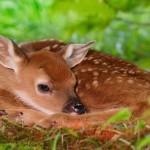 NON TOCCATECI! COME COMPORTARSI CON CUCCIOLI DI ANIMALI SELVATICI