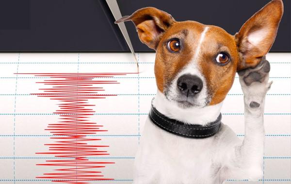 animali-terremoti