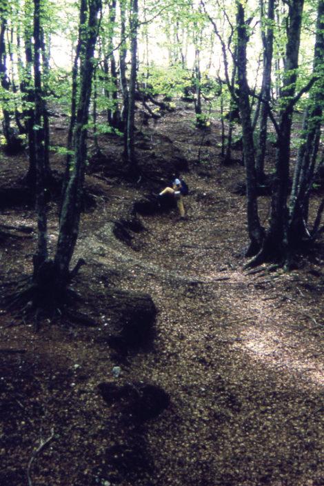 Scarpata di faglia prodotta dal terremoto del 1980 sul Monte Carpineta nei pressi di Colliano, in provincia di Salerno.